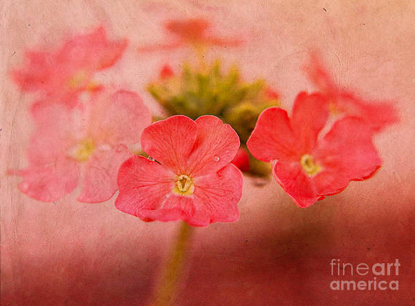 Flowers Poster featuring the photograph Pink Blossoms by Billie-Jo Miller
