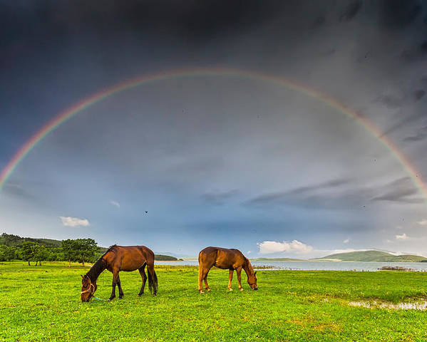 Bulgaria Poster featuring the photograph Rainbow Horses by Evgeni Dinev