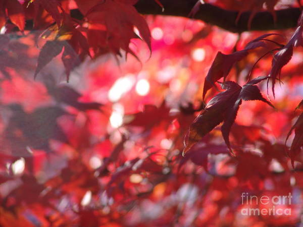Poster featuring the photograph Red Leaves 3 by Rod Ismay