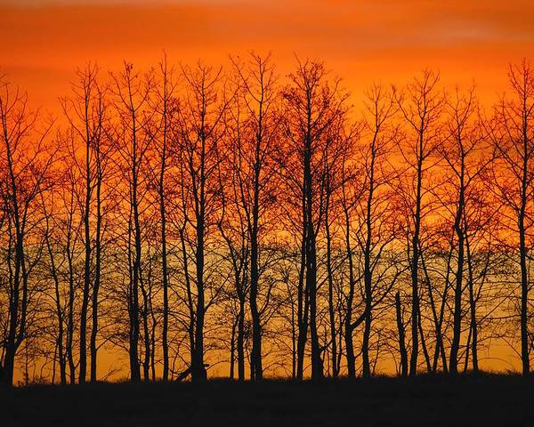 Horizontal Poster featuring the photograph Silhouette Of Trees Against Sunset by Don Hammond