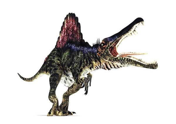 Spinosaurus Poster featuring the photograph Spinosaurus Dinosaur, Artwork by Animate4.comscience Photo Libary