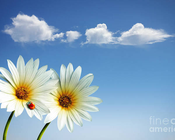 Air Poster featuring the photograph Spring Flowers by Carlos Caetano