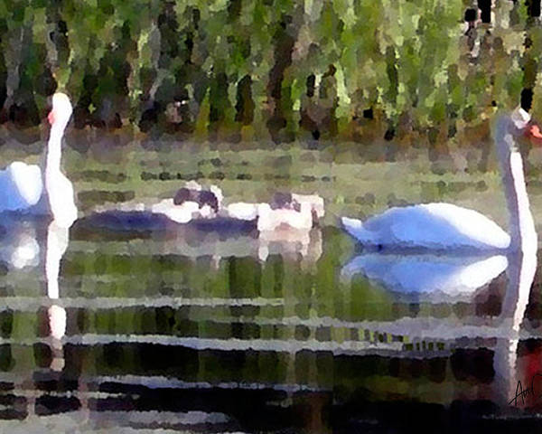 Cape Cod Poster featuring the painting Swans In Hue Pallet by Douglas Auld