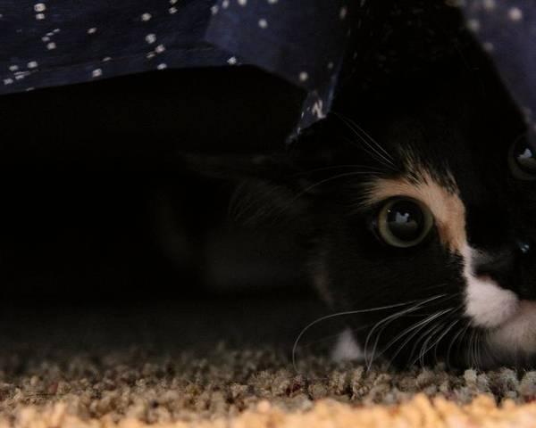 Kitten Poster featuring the photograph Tali-2 by Tacey Hawkins