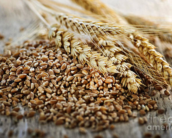 Wheat Poster featuring the photograph Wheat Ears And Grain by Elena Elisseeva