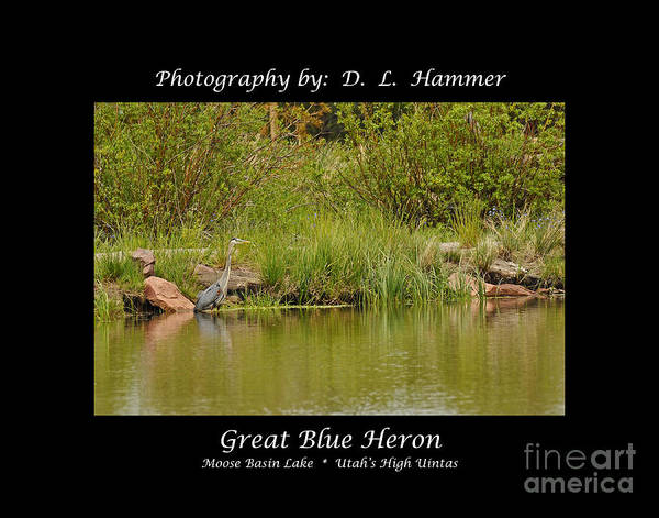 Birds Poster featuring the photograph Great Blue Heron by Dennis Hammer