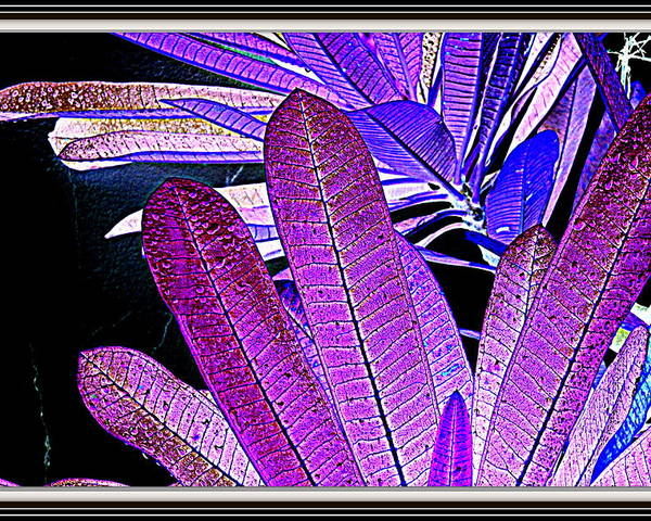 Leaves---leaves Poster featuring the photograph Leaves by Anand Swaroop Manchiraju
