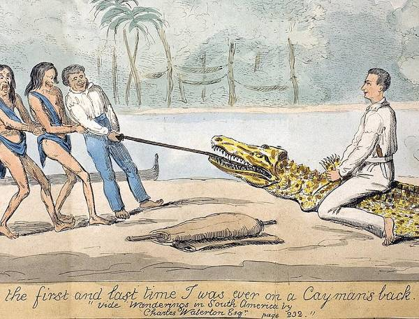 19th Century Poster featuring the photograph 1826 Naturalist Charles Waterton & Caiman by Paul D Stewart