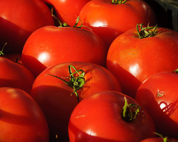 Harvest Poster featuring the photograph Ripe Tomatoes by Connie Cooper-Edwards