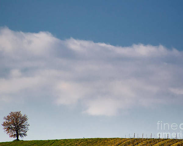 Tree Poster featuring the photograph Lonely Tree by Mats Silvan