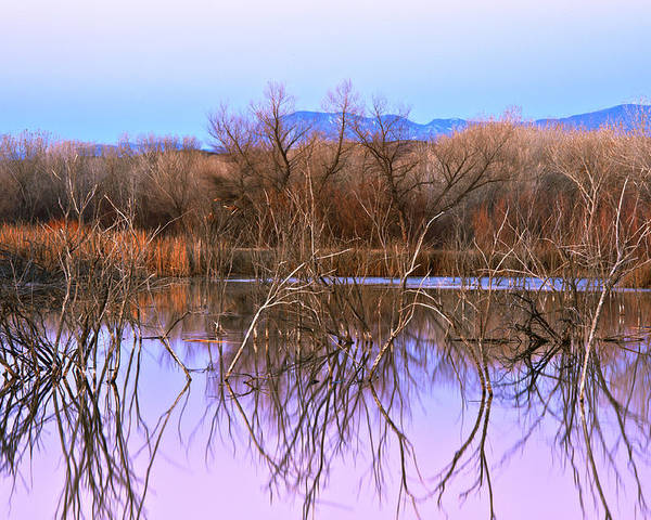 Landscape Poster featuring the photograph Bosque Del Apache by Larry Gohl
