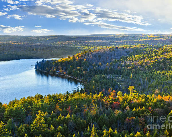 Forest Poster featuring the photograph Fall Forest And Lake by Elena Elisseeva
