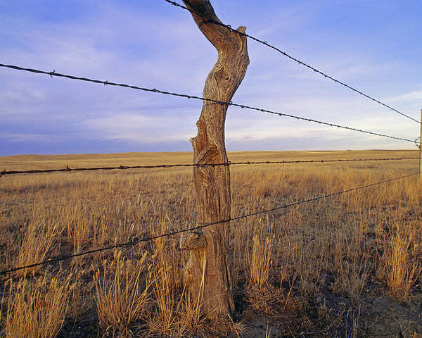 Phillips County Poster featuring the photograph A Barbed Wire Fence Stretches by Gordon Wiltsie