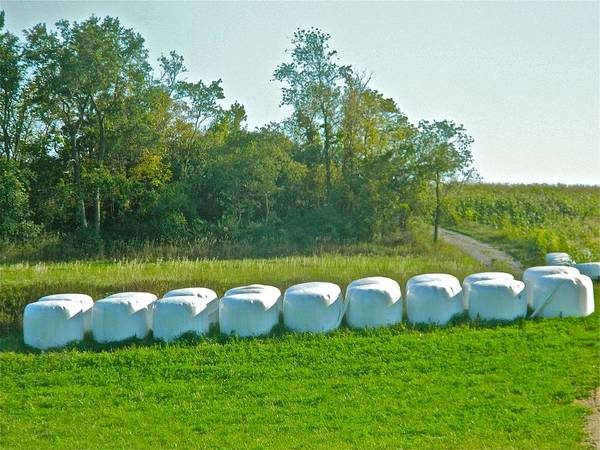 Fodder Poster featuring the photograph A Marshmallow World In Wisconsin by Randy Rosenberger