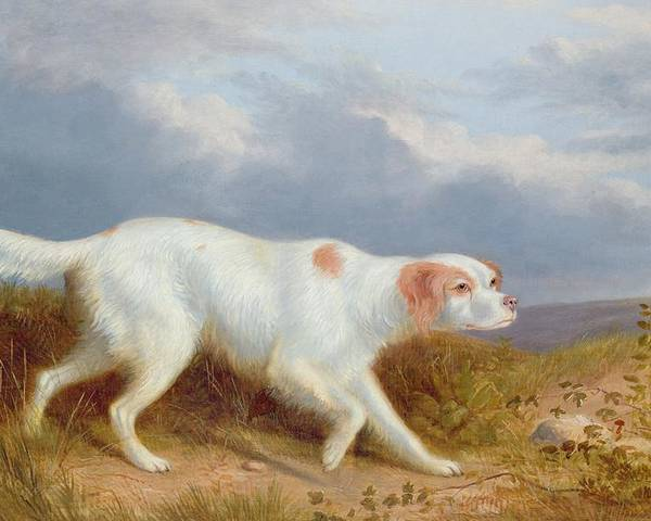 A Setter On The Moor Poster featuring the painting A Setter On The Moor by Philip Reinagle