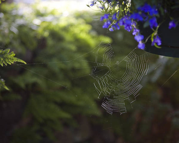Massett Poster featuring the photograph A Spider Web In A Garden by Taylor S. Kennedy