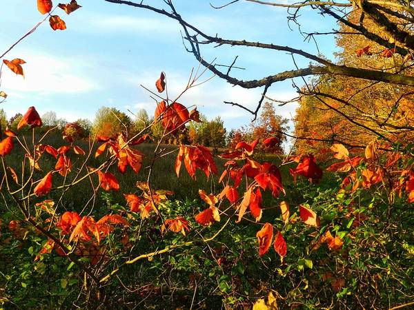 Autumn Poster featuring the photograph A Splash Of Red II by Julie Dant