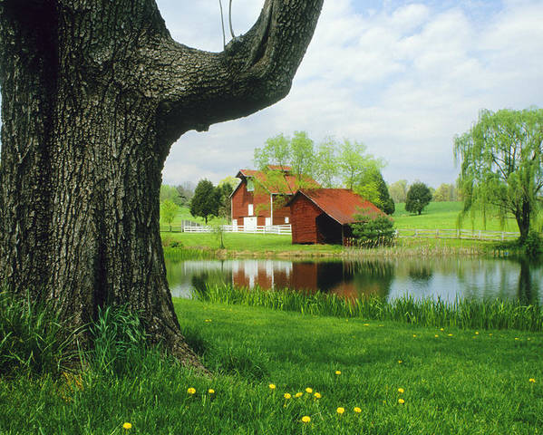 Outdoors Poster featuring the photograph A Tree Frames A View Of A Farm by Annie Griffiths