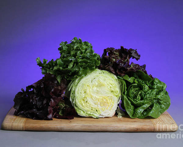 Lettuce Poster featuring the photograph A Variety Of Lettuce by Photo Researchers, Inc.