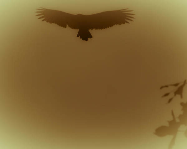 Vulture Poster featuring the photograph Above The Lake by Kim Henderson