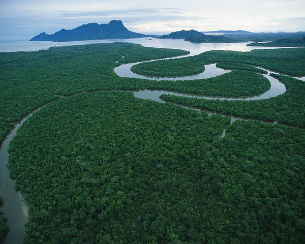 Asia Poster featuring the photograph Aerial View Of The Salak River. Mount by Tim Laman