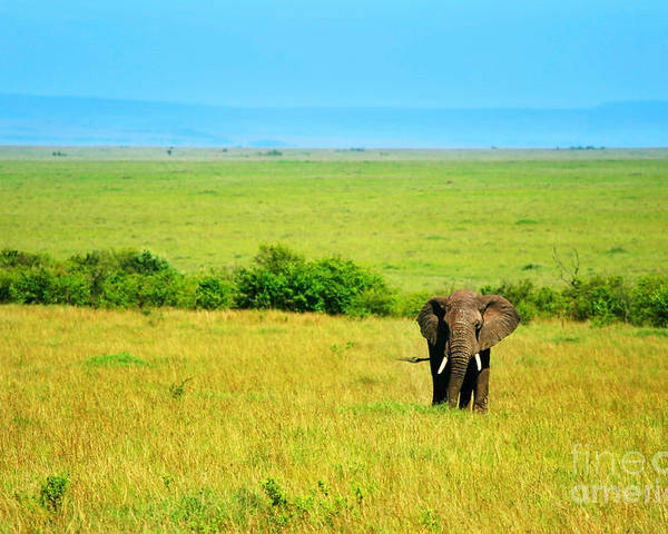 Africa Poster featuring the photograph African Elephant In The Wild by Anna Om