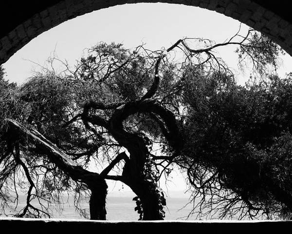 Alcatraz Poster featuring the photograph Alcatraz Tree by Ty Helbach