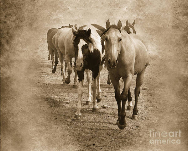 American Quarter Horse Poster featuring the photograph American Quarter Horse Herd In Sepia by Betty LaRue