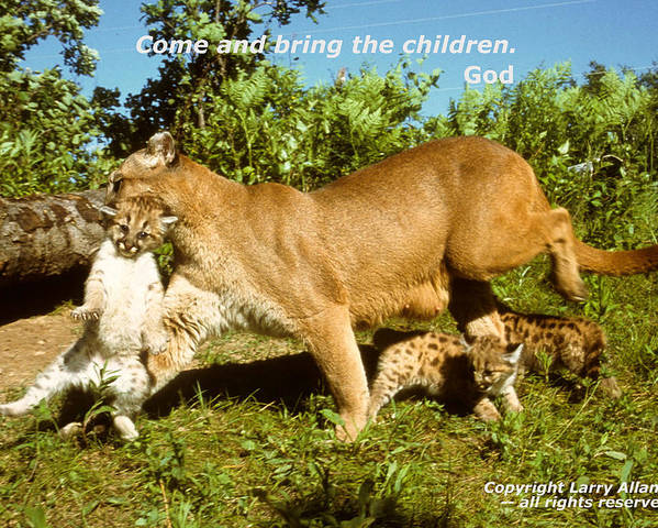 Cougar Poster featuring the photograph And Bring The Children by Larry Allan