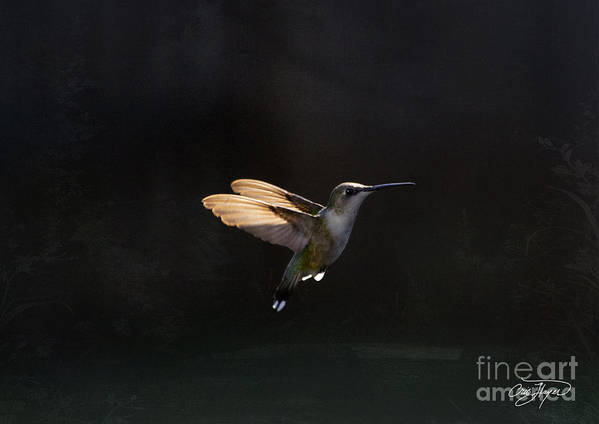 Hummingbird Poster featuring the photograph Angel Wings At Sunset by Cris Hayes