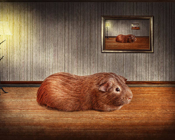 Savad Poster featuring the photograph Animal - The Guinea Pig by Mike Savad