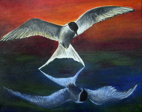 Birds Poster featuring the painting Arctic Tern Reflection by Karen Copley