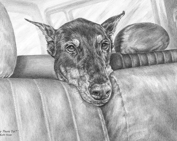 Doberman Poster featuring the drawing Are We There Yet - Doberman Pinscher Dog Print by Kelli Swan
