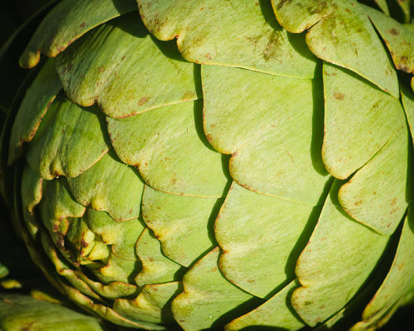 Harvest Poster featuring the photograph Artichoke by Connie Cooper-Edwards