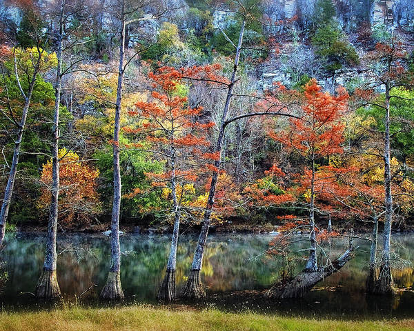 Trees Poster featuring the photograph Autumn At Beaver's Bend by Tamyra Ayles