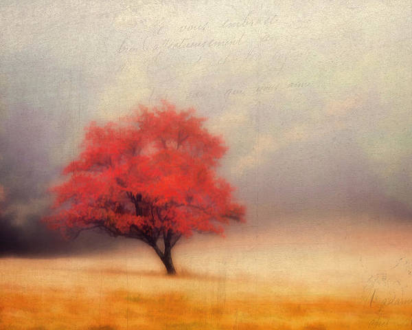 Blue-ridge-parkway Poster featuring the photograph Autumn Fog by Darren Fisher