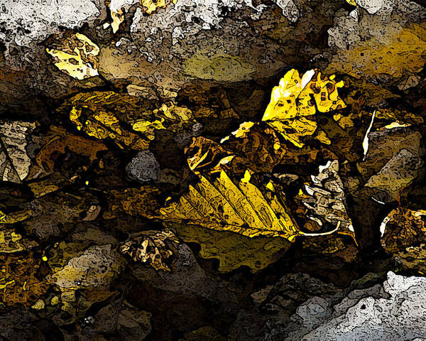 Nature Poster featuring the photograph Autumn Gold by Michael Friedman