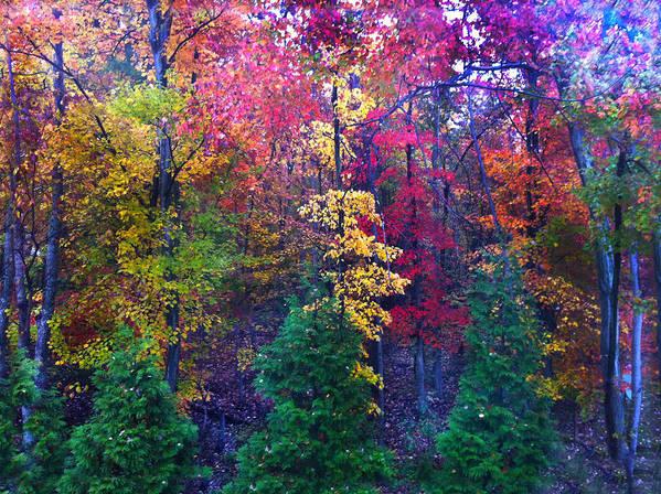 Autumn Poster featuring the photograph Autumn In Virginia by Nabila Khanam
