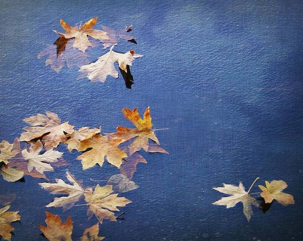 Nature Poster featuring the photograph Autumn Leaves Drifting by Ginger Denning