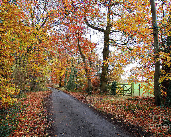 Arley Estate Poster featuring the photograph Autumn Leaves by Harold Nuttall