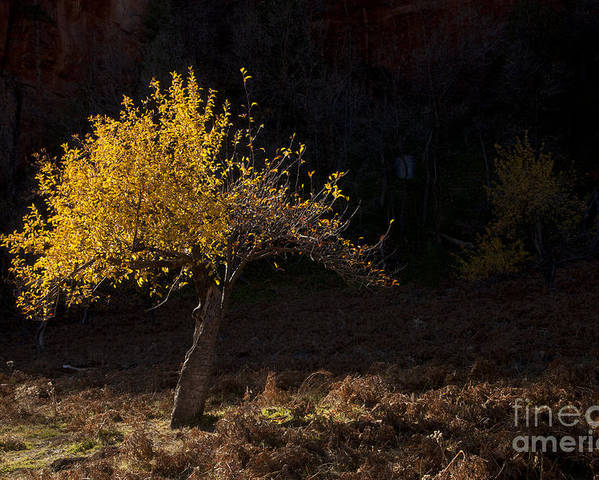 Autumn Poster featuring the photograph Autumn Light by Mike Dawson