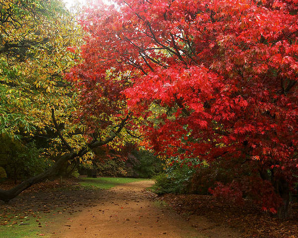 Virginia Water Poster featuring the photograph Autumn Path by David Resnikoff