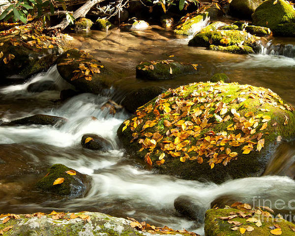 Autumn Poster featuring the photograph Autumn Stream by Lena Auxier