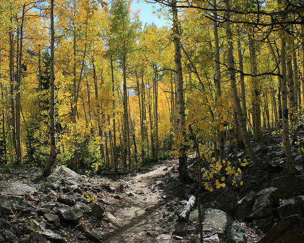 Autumn Poster featuring the photograph Autumn Trail by Mark Sacco