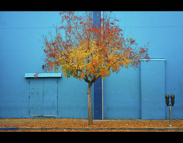 Horizontal Poster featuring the photograph Autumn Tree by Monica Murphy