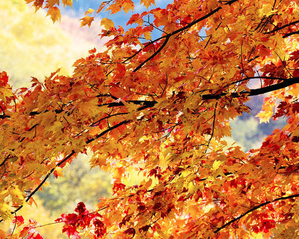 Golden Leaves Poster featuring the photograph Autumns Gold Great Smoky Mountains by Rich Franco