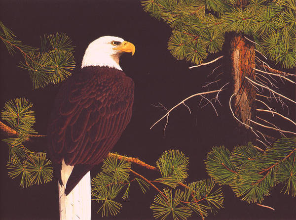 Bald Eagle Poster featuring the drawing Bald Eagle by Bill Gehring