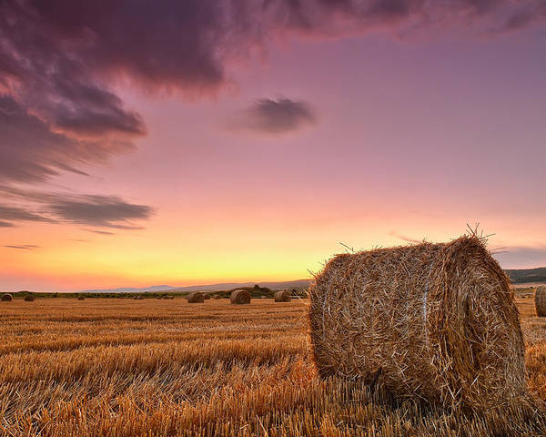 Bulgaria Poster featuring the photograph Bales At Twilight by Evgeni Dinev