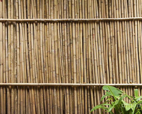 Architectural Detail Poster featuring the photograph Bamboo Fence by Don Mason