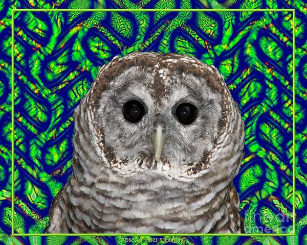 Barred Owl Poster featuring the photograph Barred Owl In A Fractal Tree by Rose Santuci-Sofranko